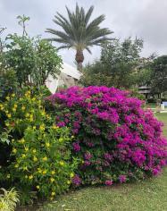 flowers12
